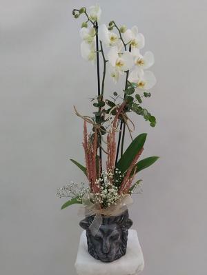 Beyaz Orkide Tasarımı Aslan Vazo